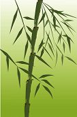 design of chinese bamboo trees vector illustration poster
