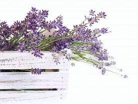 Styled Stock Photo. Decorative Still Life Floral Composition. Fresh Flowers Of Lavender In A White W
