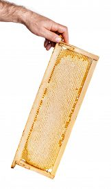 Honey Cutter In Honeycombs With A Wooden Frame On A White Background, Isolate