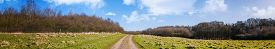 Countryside Road On A Green Field In The Early Spring Under A Blue Sky With White Clouds