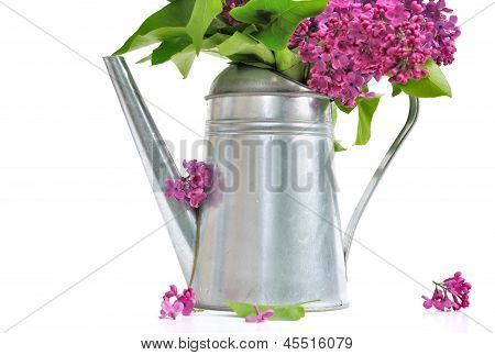 Lilac In Watering Can