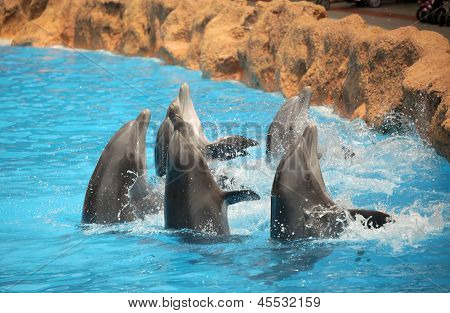 Dancing dolphins
