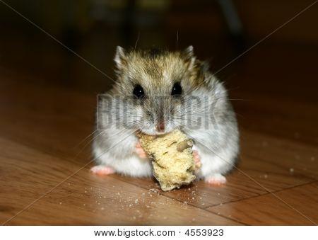 cute little Hamster Mittagessen