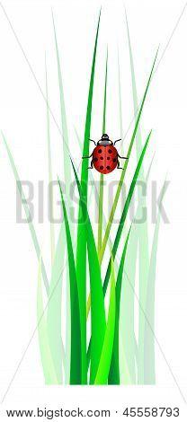Vector Ladybug In Green Grass