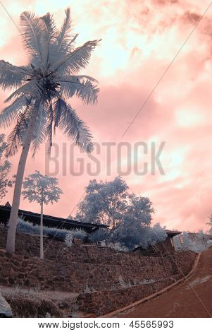 coconut tree in an infra-red color
