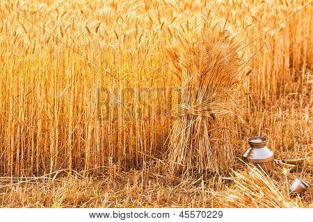 Sheaves Of Ripe Wheat