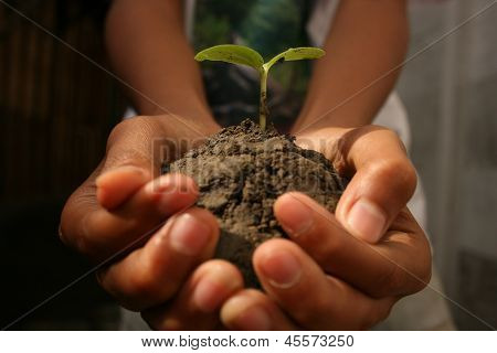 holding a small plant