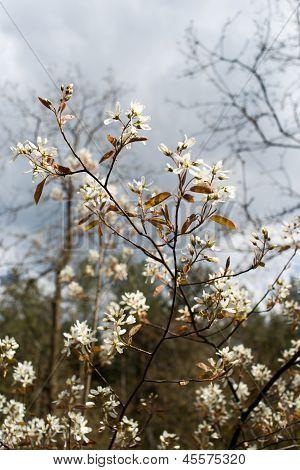 Weiße Blüte im Baum
