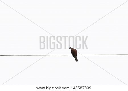 Bird On Wire Cable