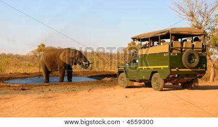 Elephant And Safari Truck