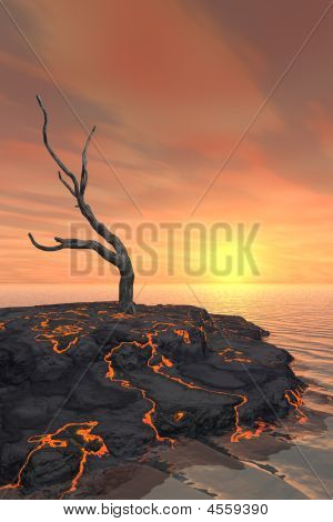 Dead Tree On Lava Flow