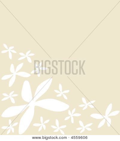 White Flowers On Pale Background