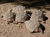 turtles family zoo nature Fuerteventura La Lajita Oasis Park Animal fauna poster