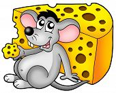 Cute mouse eating yellow cheese - color illustration. poster