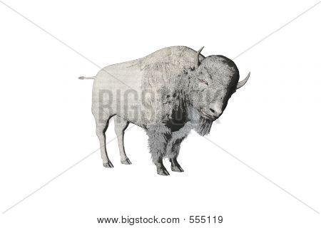 Bison Pencil Sketch