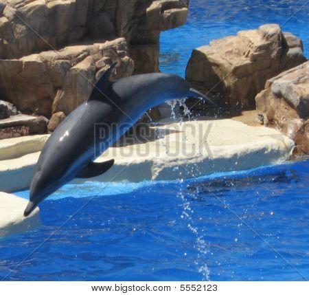 Delightful Dolphin Dive