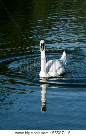 Goose In A Small Pond