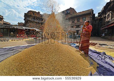 Woman threshing grain in Kathmandu, Nepal