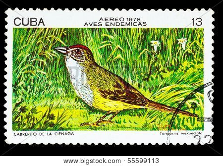 CUBA - CIRCA 1978: A stamp printed by Cuba, shows bird zapata sp