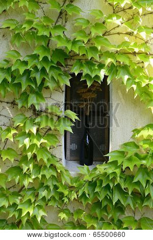 small window with a bottle