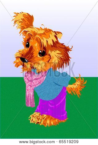Auburn puppy.