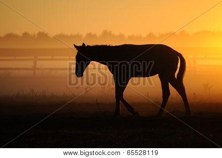 foal against the dawn