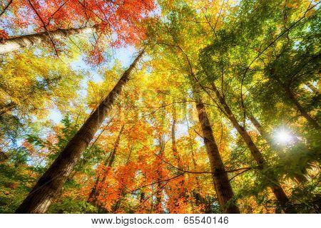 Bright Sun Light Through The Tree Leaves In Autumn