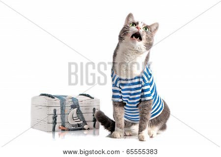 grey cat in seaman suit on isolated background with chest