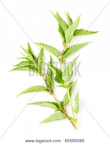 Stinging nettle (Urtica dioica) is rich in vitamins A, C, iron, potassium, manganese, and calcium. Herb can be used to treat arthritis, anemia, hay fever, kidney problems and pain.