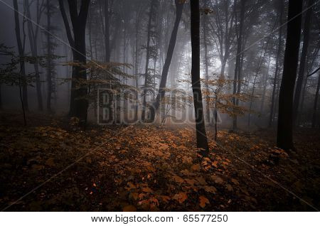 Mysterious forest with fog in autumn evening