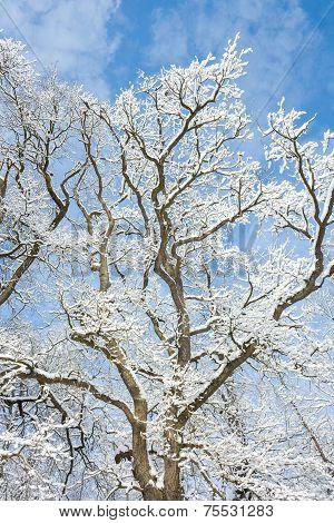 Winter Wonder Land - Snow Tree