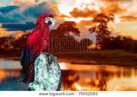 Macaw in Pantanal, Brazil