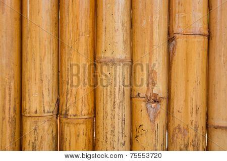 Dry Bamboo pole pattern