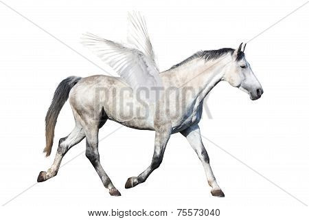 Gray Horse Pegasus Trotting Isolated On White