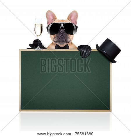 french bulldog holding a glass of champagne behind a green big blackboard ready to toast isolated on white background poster