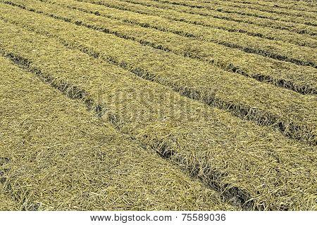 Organic Vegetable Plots