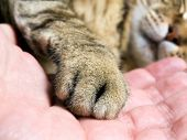 Closeup of cat paw in the man hand. poster