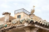 Seagull on old moroccan building in Essaouira city poster