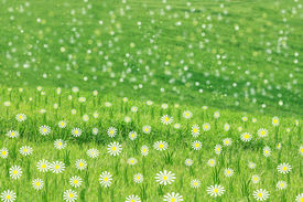 Green spring meadow background