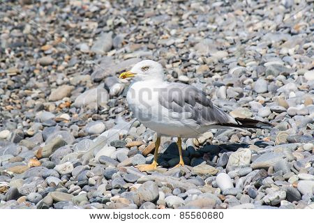 Gulls on the shore
