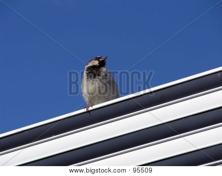 Bird On Roof1
