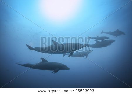 Row of dolphins swimming view under the water