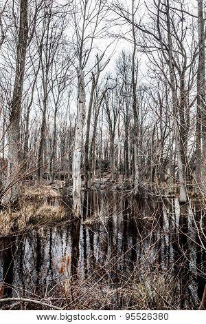 Creepy Barren Swamp Forest