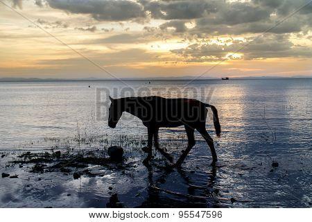 Horse On Nicaragua Lake Beach At Sunshine