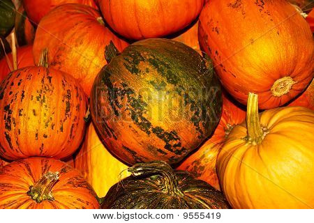 Oodles of orange and yellow ripe pumpkins