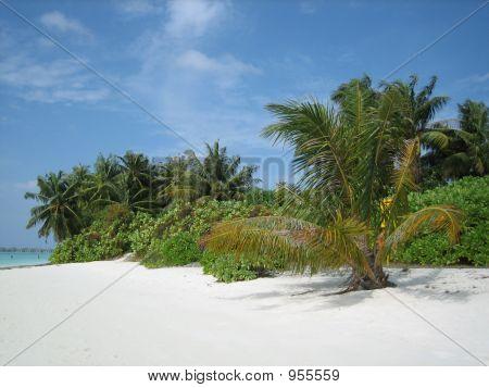 Tropical Island, Paradise Island