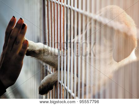 Human hand is touching a cute little doggie paw through a fence of a adoption centre.