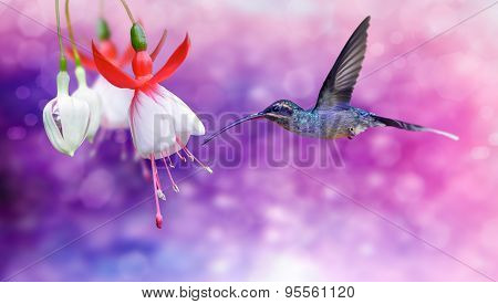Hummingbird (archilochus Colubris) In Flight Over Purple Background