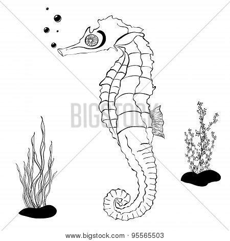 Sea Horse Color Book Vector