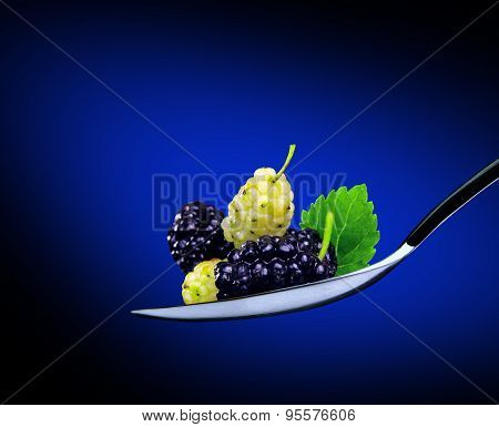 blue and white mulberry